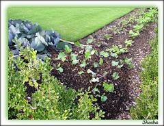 Garden within a garden ..