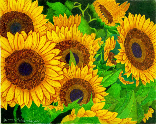 """Sunflowers"", color pencil, 14x11in"