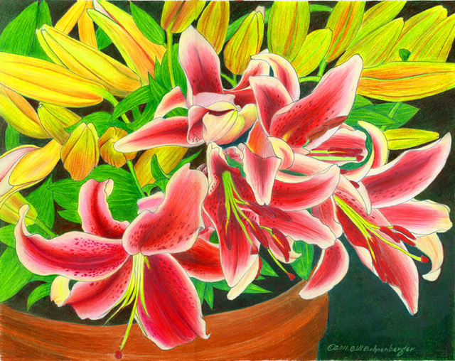"""""""Tiger LIlly 2"""", color pencil, 14x11in"""