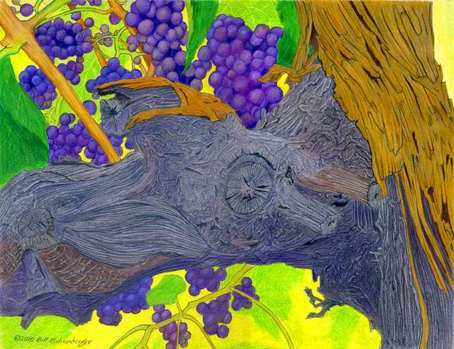 """""""Wine Stock"""", color pencil, 14x11in"""