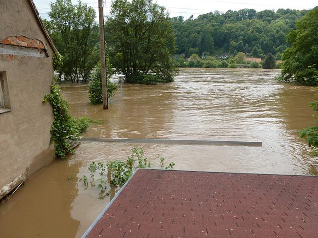 Elbhochwasser 6. Juni 2013