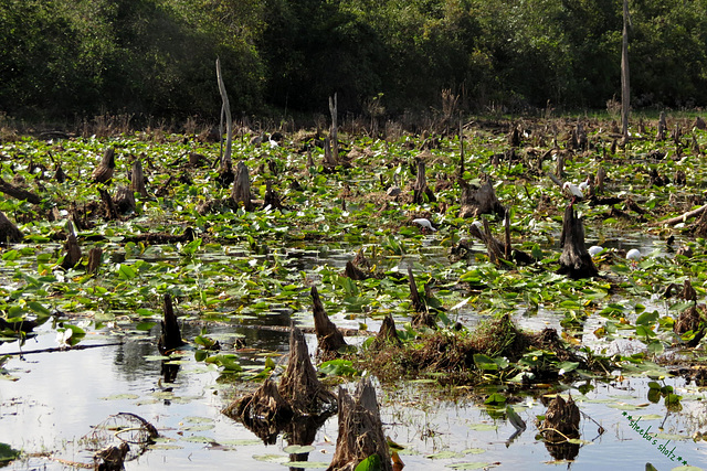 Lakeland Highlands Scrub Conservation Area ..
