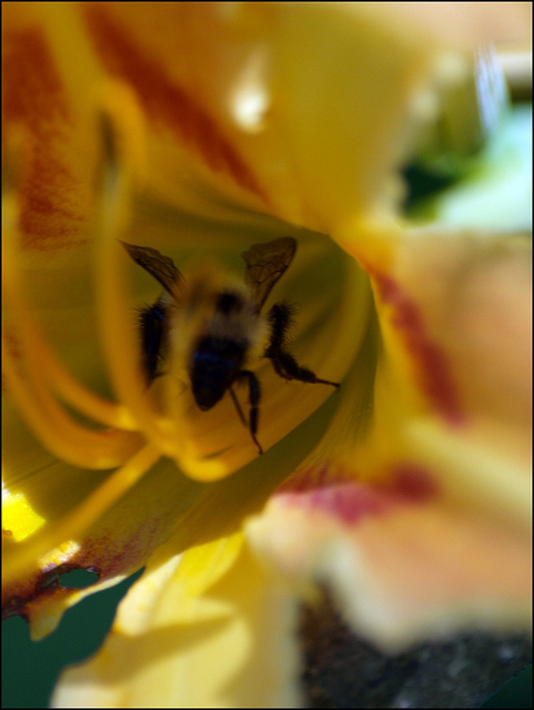 bee careful how you sniff that flower