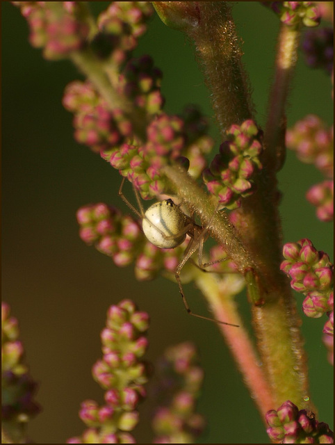 meanwhile, in the astilbes...