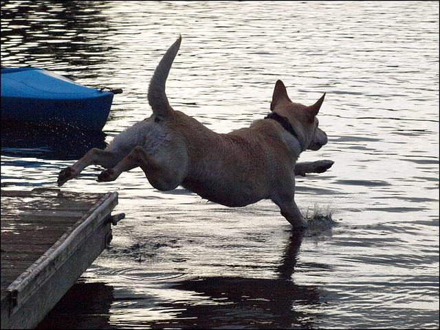 Daisy jumps off
