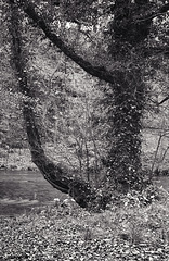 Derbyshire Wye - A Clàrsach in Miller's Dale!