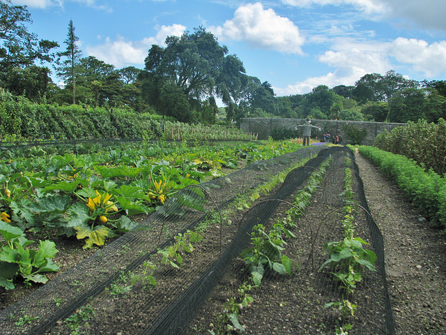 The Kitchen Garden, Helligan, Cornwall