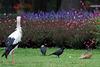 Und der Storch, der blickte stumm ... (Wilhelma)