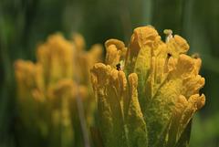 Golden Paintbrush