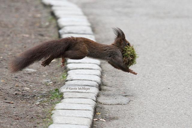 Eich- oder Flughörnchen? (Wilhelma)