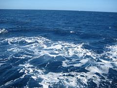 Teneriffa - Auf Wal- und Delfinsuche