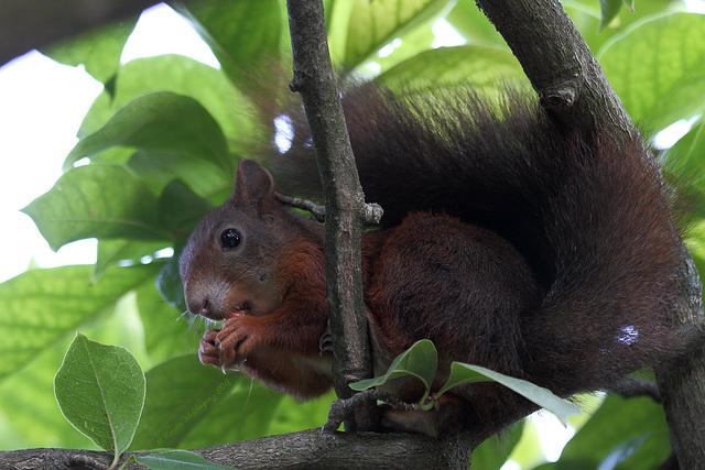 Frühstück im Baum (Wilhelma)