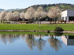 Spring in Fairfield (p3071107)