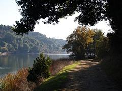 Lake Chabot (pb160891)