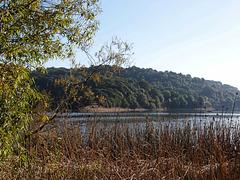 Lake Chabot (pb160890)