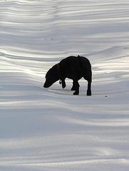 Dog & shadows
