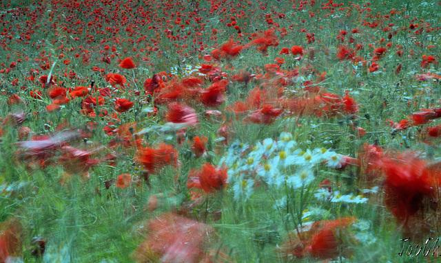 The Dancing Meadow