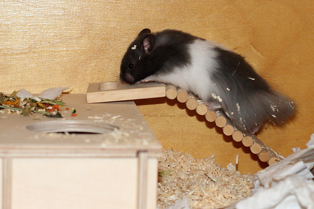 Henry ist eingezogen! :-)