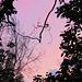 pastels overhead -