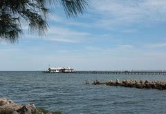Watching the brown pelicans ..