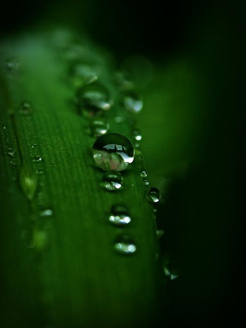 post rain