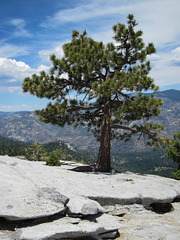 Sequoia NF, Dome Rock (3398)