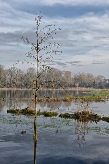Flooded fields in winter light - 3