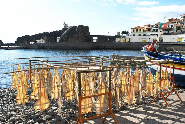 Im Hafen von Camara de Lobos. Stockfischproduktion. ©UdoSm