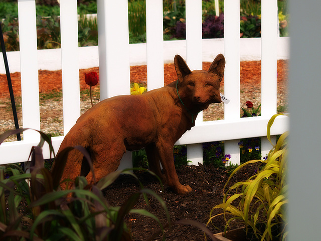there's a jackal in the garden!