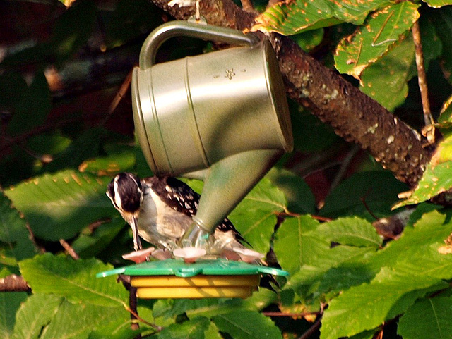 surprise visitor at the hummingbird feeder