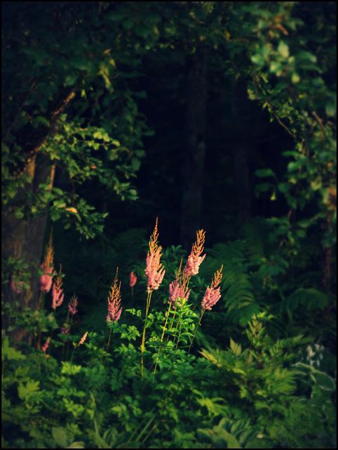 in quiet corners of the garden