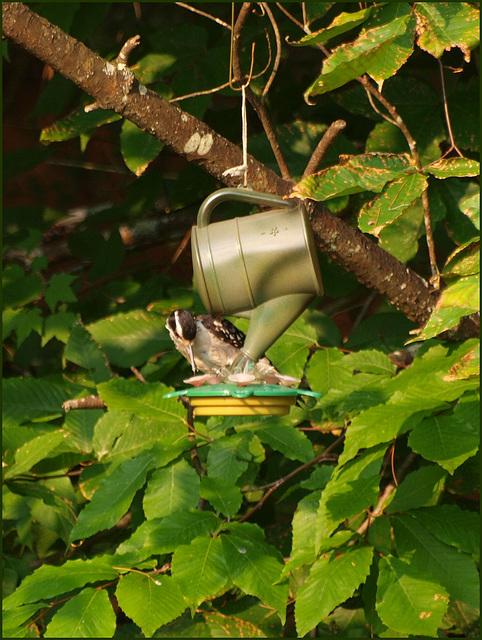 ...odd hummingbird...