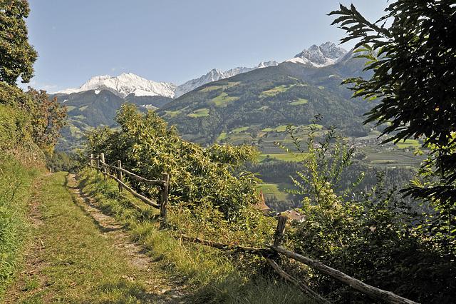 Tirolerweg, Kastanienbäume - 2008-10-04_DSC2274_Bearb-01