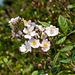 Kletterrose - 2011-04-28-_DSC6736