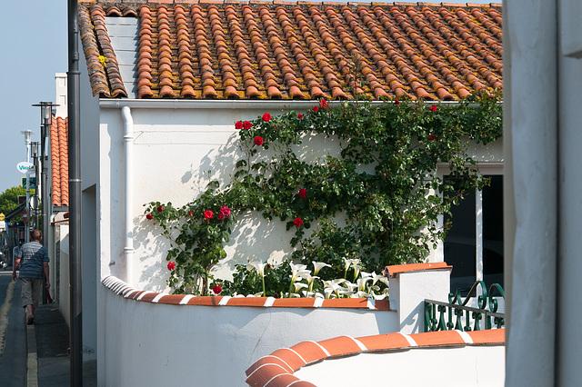 Haus mit Rosen und Calla in La Cotinière -  2011-04-28-_DSC6729