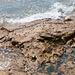 Schnecken auf Felsplatte bei Ebbe - 2011-04-28-_DSC6663