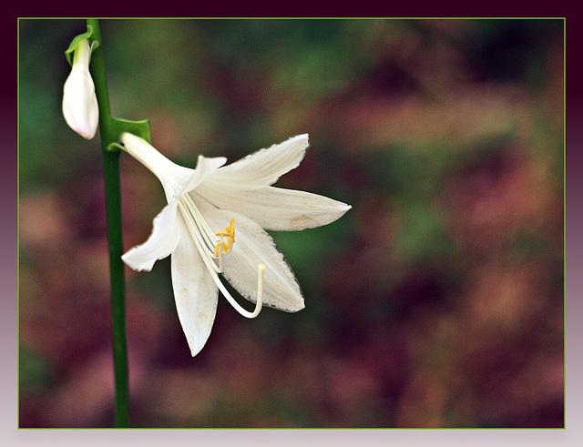 little white bloom