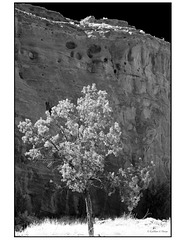 Wallatowa, tree, and cliffs in black and white