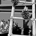 Pueblo Ladder and Chili Ristras