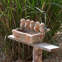 Stumme Ton-Vögel beim Motel *** Île de Lumière - 2011-05-02-_DSC7386