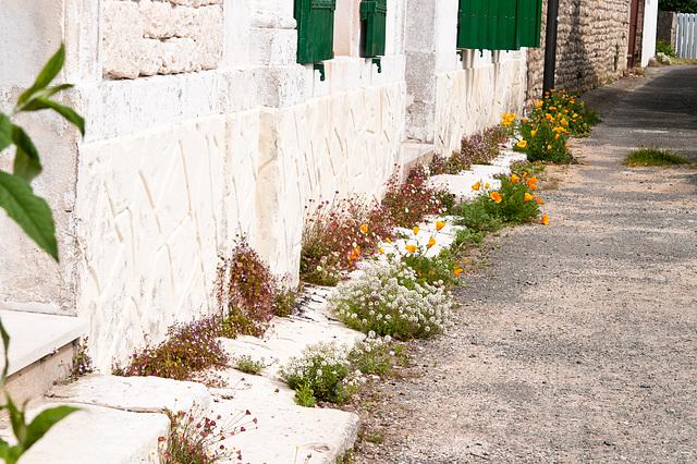 Flora zwischen Haus und schmaler Seitenstrasse in La Cotinière - 2011-04-29-_DSC6796