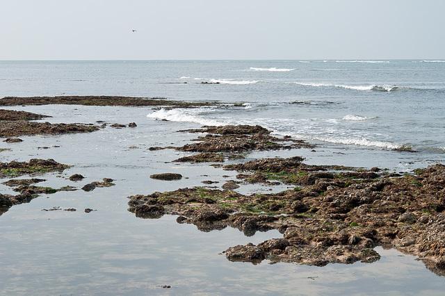 Am Rande des Atlantiks bei Ebbe - 2011-04-29-_DSC6771