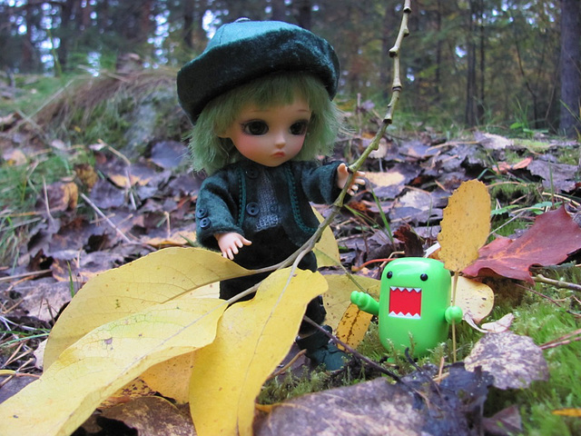 In the fall forest