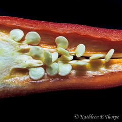 Red Chili pepper seeds.  Nothing like a macro image to make one appreciate what one eats ... {:o)!!!