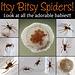 Itsy Bitsy Spiders!!