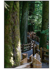 Cathedral Grove, British Columbia, Canada