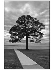 Tree silhouette in black and white