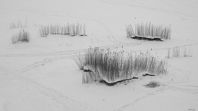 beds of reeds