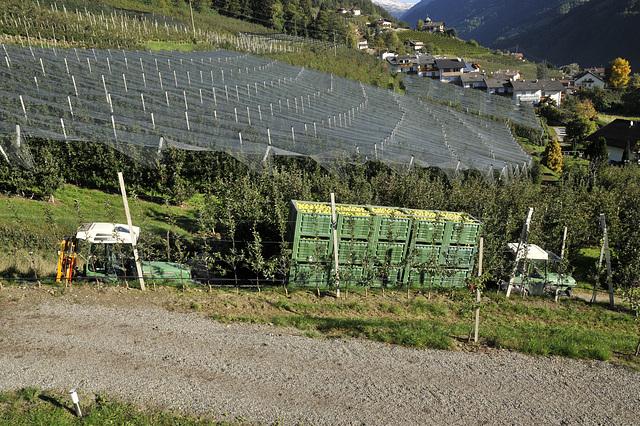 Transport von geernteten Äpfeln im Südtirol - 2013-10-18 -_DSC9325 - Copy