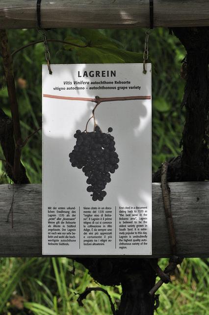 Lagrein-Tafel im Botanischen Garten Trauttmansdorff in Meran - _DSC7854 - Copy